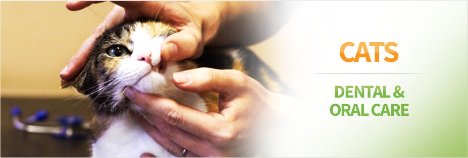 Pet Wish Pros
